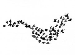 BIRD FLOCKS AND GOVERNANCE