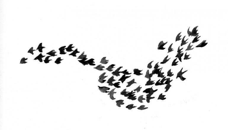 BIRD FLOCKS AND GOVERNANCE